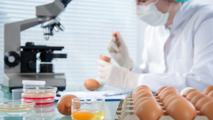 Salmonella e. coli guidelines