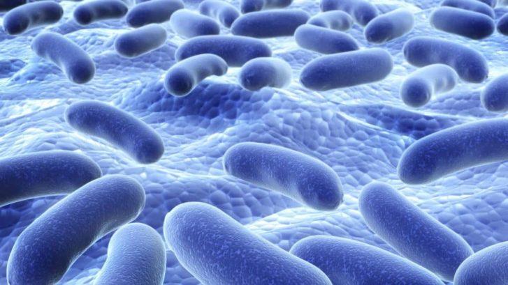 probiotics healthy
