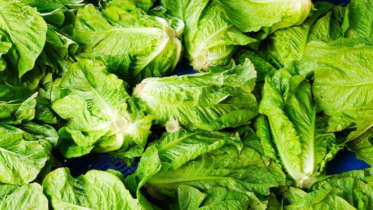 romaine lettuce recalls