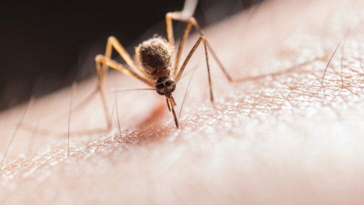 summer mosquitoes